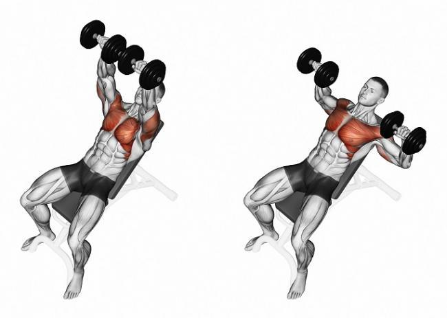 啞鈴是胸大肌臥推訓練最常見的器材