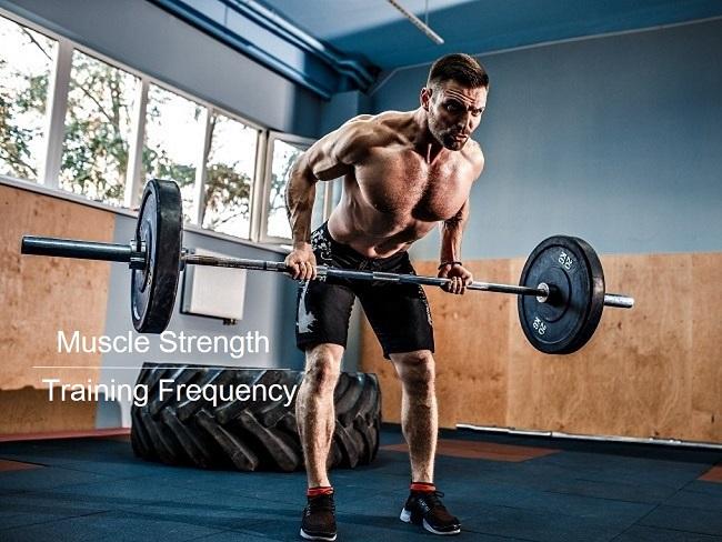 肌肉力量與訓練頻率的關係