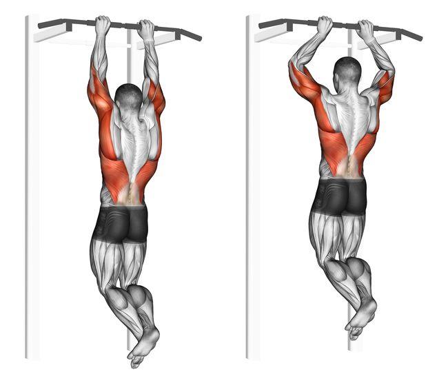 吊單槓需參與的肌群