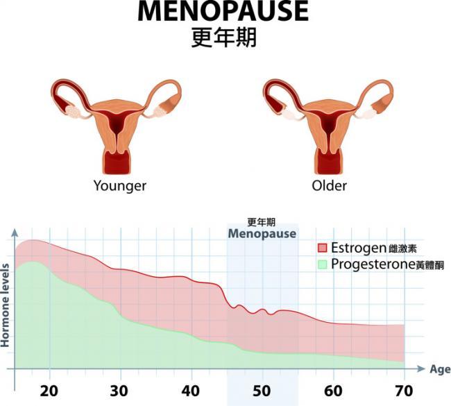 年齡與女性荷爾蒙的關聯