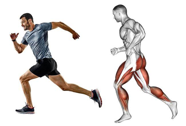 跑步使用臀部及腿部肌群