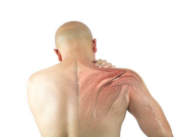 運動受傷後的營養介入