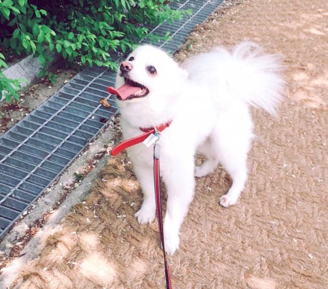 帶小狗散步運動