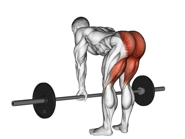 腿後肌與運動的必要性