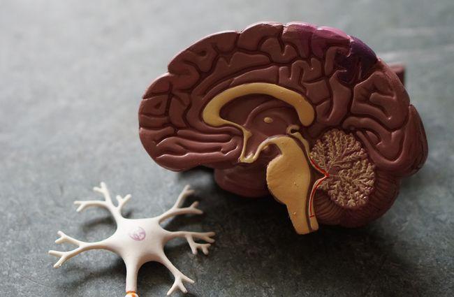 大腦的記憶中心海馬迴