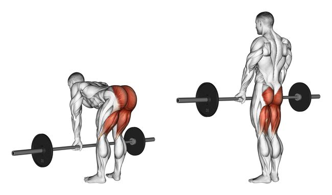 膕膀肌與臀肌