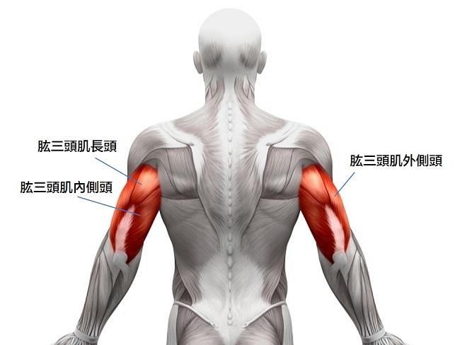 肱三頭肌有三個部位