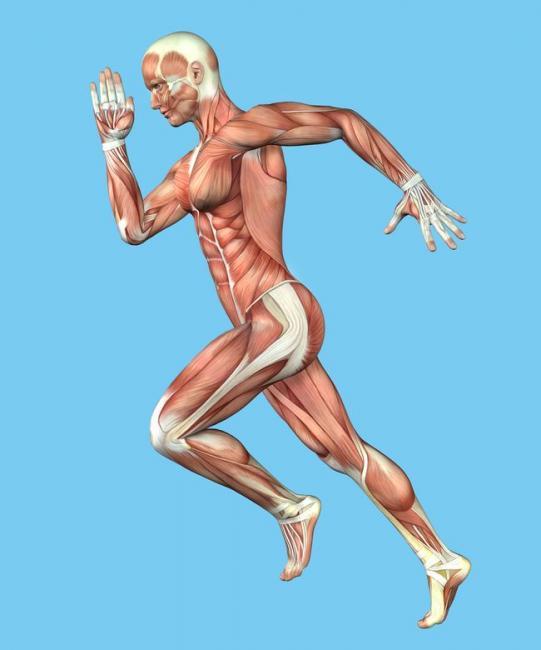 基因改變輸送給肌肉的氧氣量