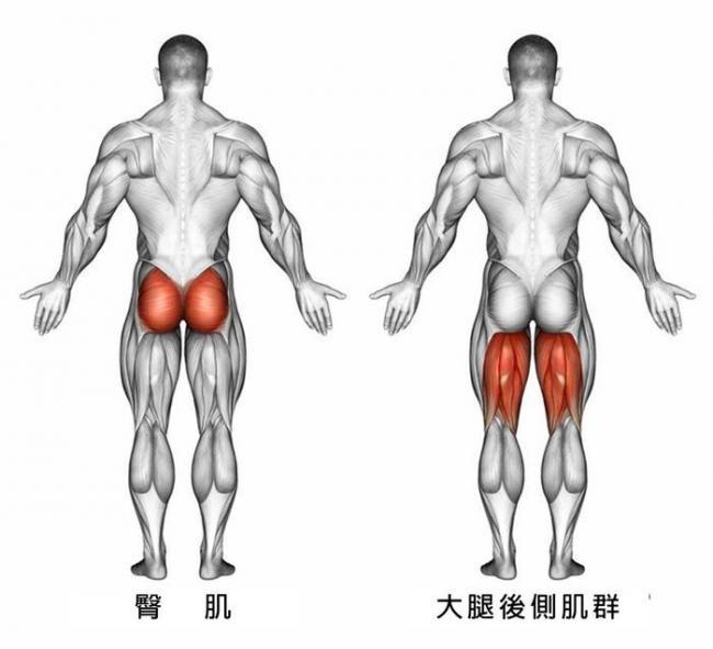 大腿後側膕旁肌與臀肌