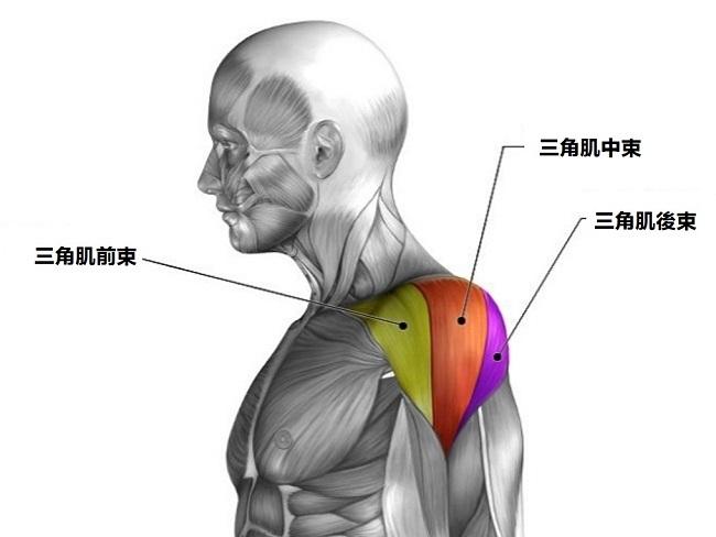 三角肌的後束該如何訓練