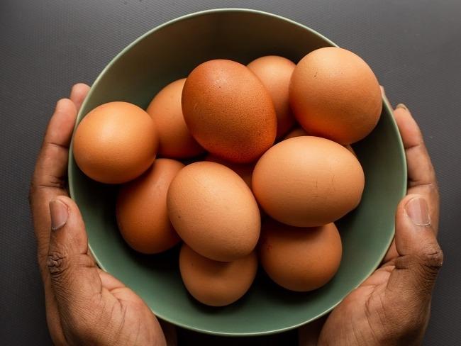 蛋白質的重要性