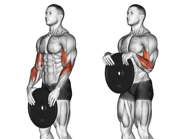前臂肌群有三個常見的訓練動作