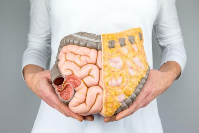 內臟脂肪是指環繞在腹腔及腸胃周圍的脂肪