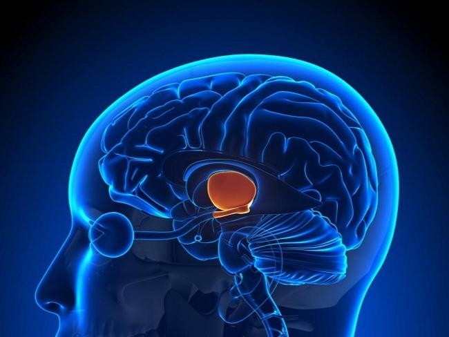 體重增減與大腦的調節有關