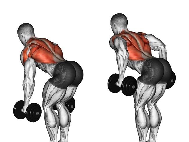 背部肌群常見的訓練動作
