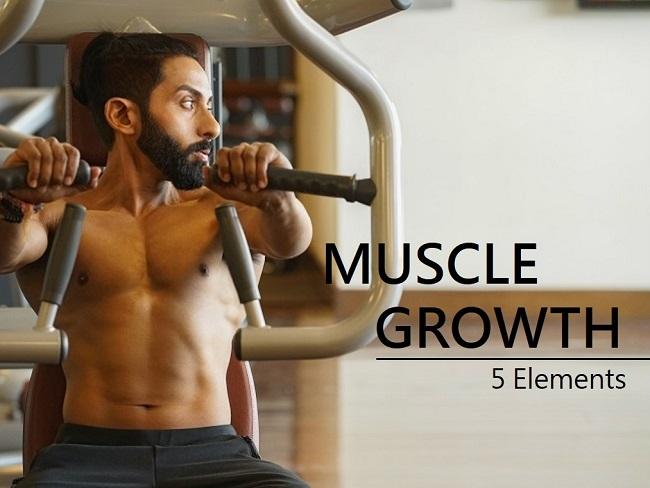 增加肌肉量的要素