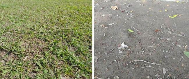 山林小徑草地與泥土地