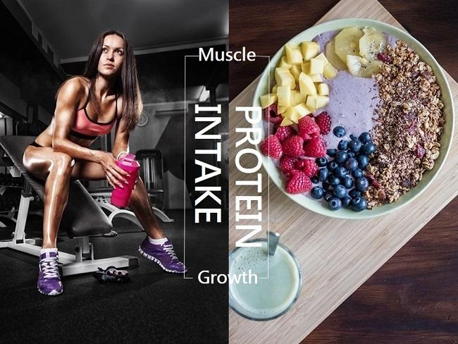 肌肉成長與蛋白質有關
