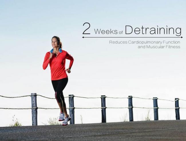 停止跑步2週對心肺肌肉的影響