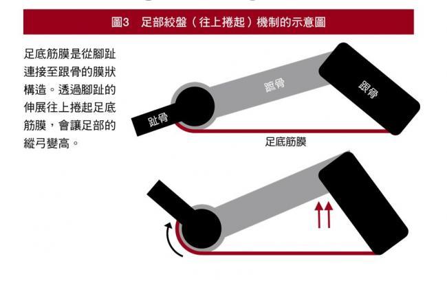 足部絞盤機制