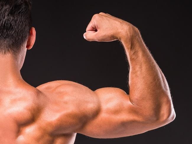 肌肉的成長與胺基酸比例有關