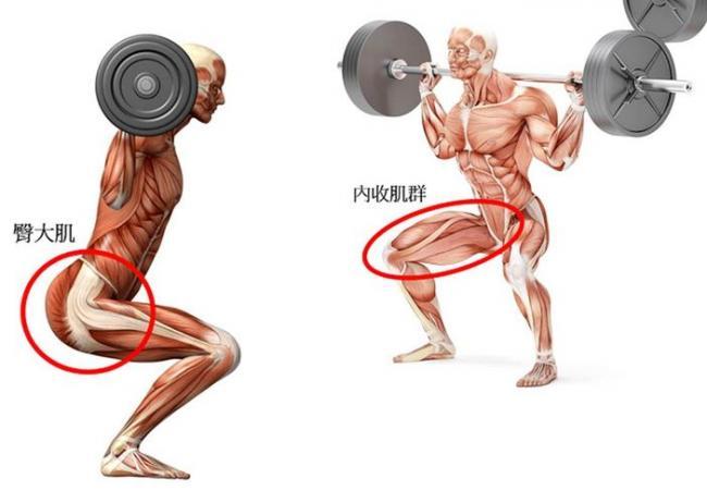 內收肌群與臀大肌