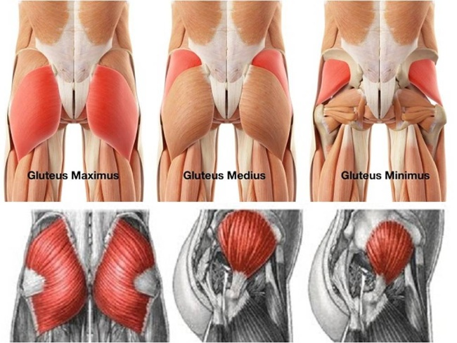 臀部肌群的三大塊