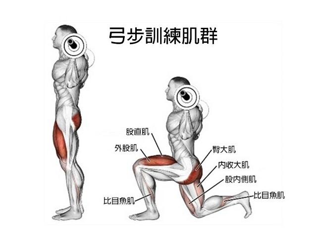 前後弓步訓練肌群