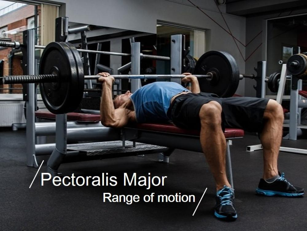 槓鈴臥推關係著胸大肌與三角肌之間的互動