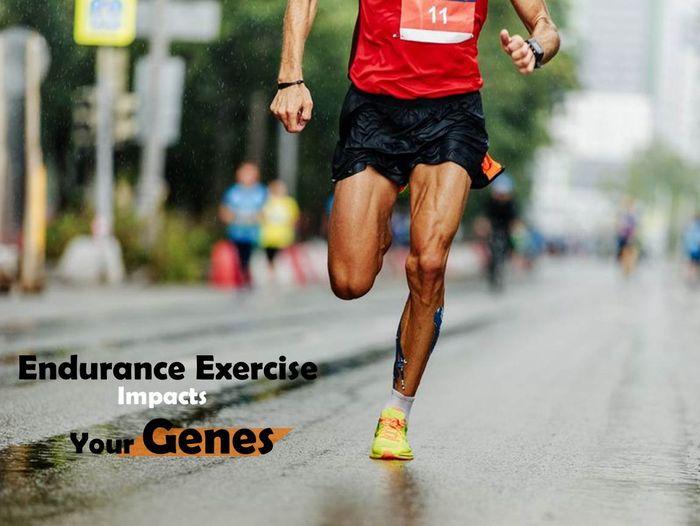跑步改變基因增加肌肉效率